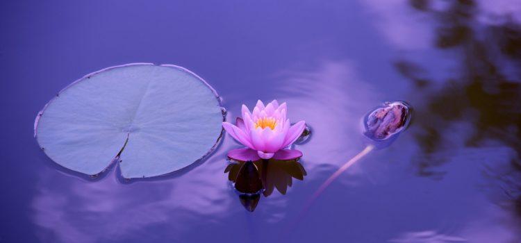 Mindfulness: che cos'è?